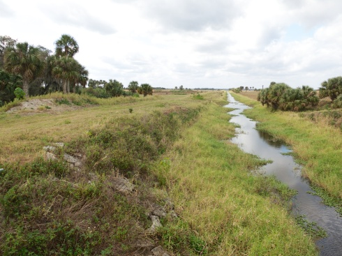 We went down the left side of the canal. Moccasin Island Tract, Brevard County, FL, 2/9/13