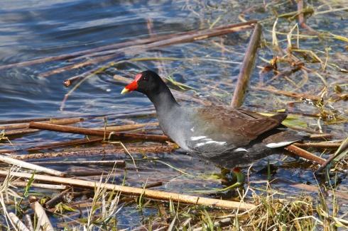 Rich Grissom Memorial Wetlands Viera, FL 1/26/14