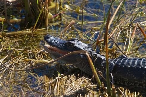 Rich Grissom Memorial Wetlands Viera, FL 2/9/14