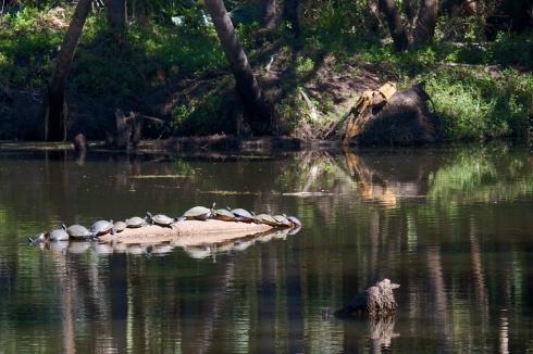 Turkey Creek Preserve Palm Bay, FL 2/16/14