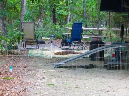 Paynes Praire Campground 4/24/14