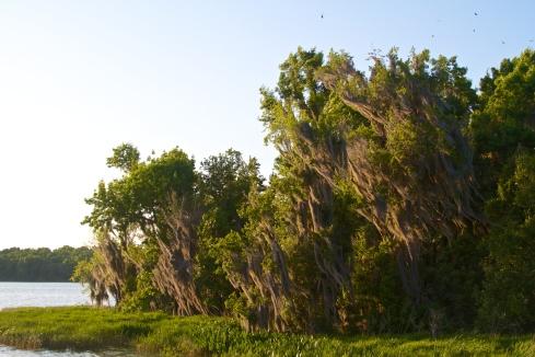 Sunset, Paynes Prairie State Park, FL 4/25/14